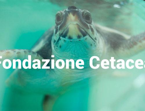 Riccione coi bambini: visita alla Fondazione Cetacea