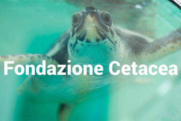 riviera bambini visita fondazione cetacea salva tartarughe