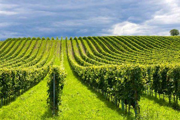 Turismo Enologico Riccione Vino Romagna Enoteche Cantine