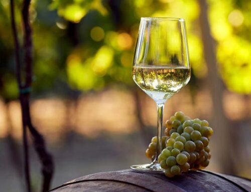 Guida ai vini e vitigni dei Colli di Rimini, dal Sangiovese al Trebbiano